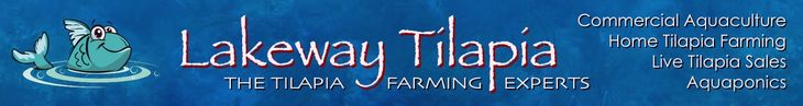 Tilapia farming guide - Understanding the five needs of tilapia
