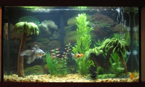 Peceras decoradas con peces buscar con google peceras for Peceras con peces
