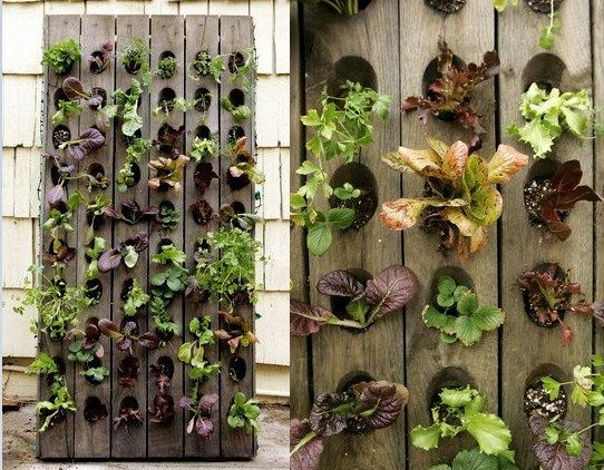 Plant walls: Vertical planting for beauty and food