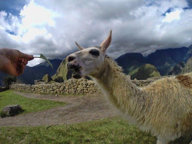 Machu Picchu w planach. Sprawdź co warto wiedzieć przed podróżą! > PERU > artykuły, realcje i zdjęcia z podróży > Globtroter.pl