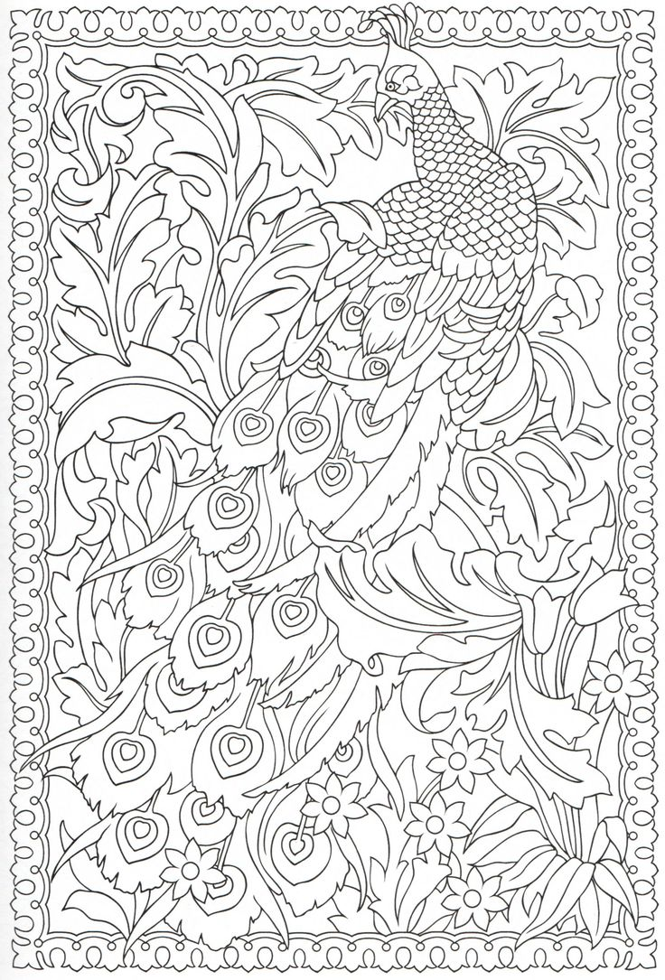 peacock coloring page 1431 - Watercolor Pages