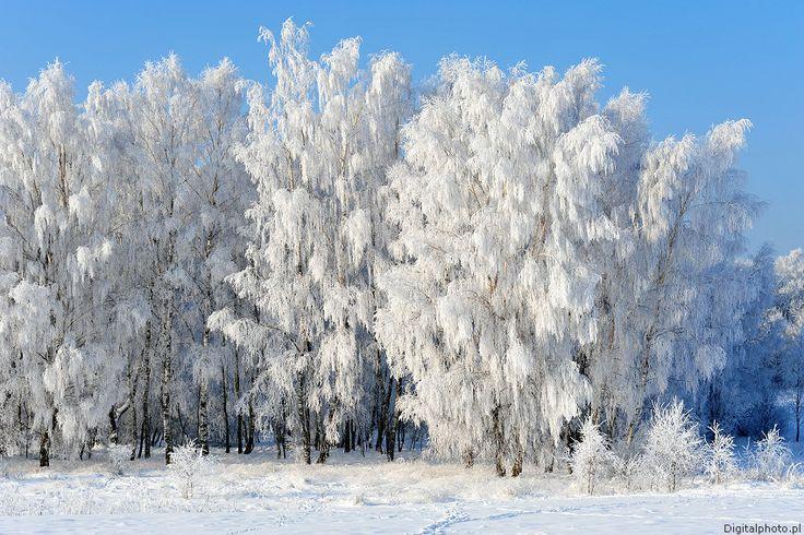 Beautiful winter scenes - more winter pictures https://digitalphoto.pl/en/pictures/winter/