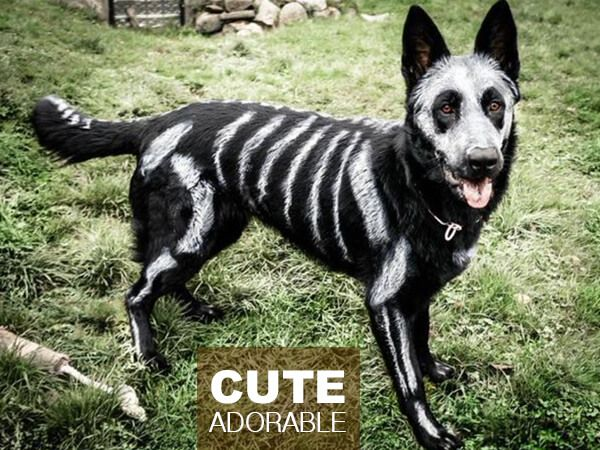 Black dog with skeleton painting