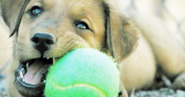 7 Terrific DIY Ideas to Recycle Tennis Balls: Crafting with sporting goods may not sound exciting but I am here to say that recycling tennis balls can be loads of fun.