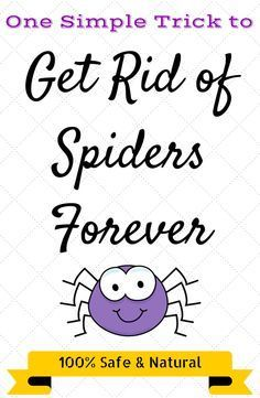 Learn how to get rid of Spiders naturally with this incredibly simple spider repellent! You don't need to rely on harmful chemicals anymore! Keep spiders out of your house for good with this homemade spider spray. #spiderrepellent #naturalspiderspray #DIY http://www.chipptips.com/spiders