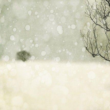 Winter: Holiday, Wall Decor, Tree, Winter Photography, Art Prints, Winter Wonderland, Snow, Christmas