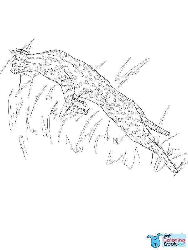 Springen Serval Malvorlagen kostenlos druckbare Malvorlagen mit Springen Serval …   – Cat Coloring Pages