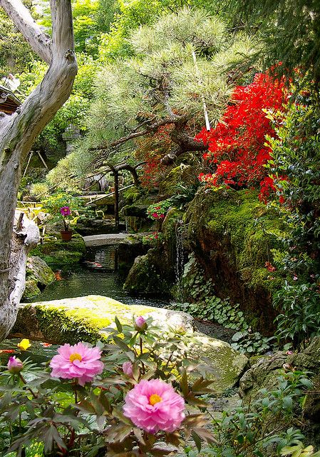 Japanese garden in Kyoto ,Japan