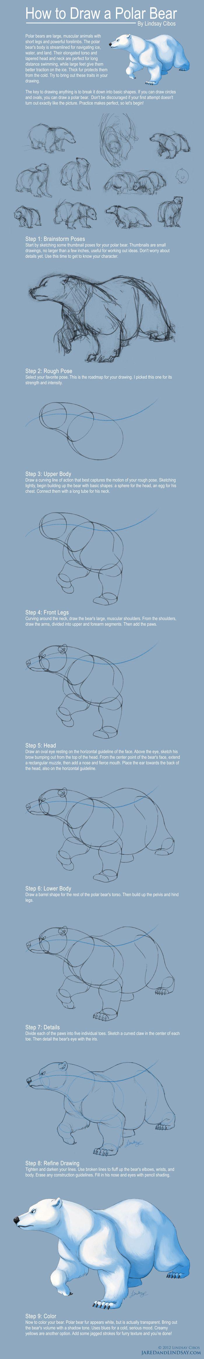 How to Draw a Polar Bear by LCibos.deviantart.com on @deviantART