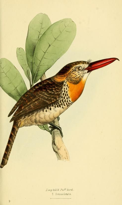 A selection of the birds of Brazil and Mexico : - Biodiversity Heritage Library