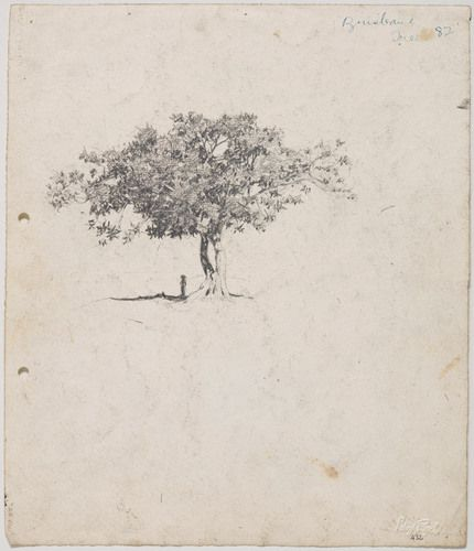 Moreton Bay Fig at Milton, figure under tree c.1912-17 image
