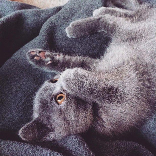 But they're not afraid to have fun. | 26 Grey Cats Who Are Too Damn Beautiful For This World