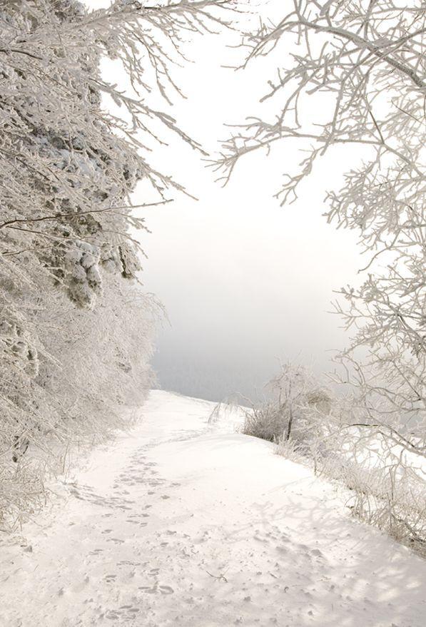 blanc, neige, hiver, paysage, route, arbres