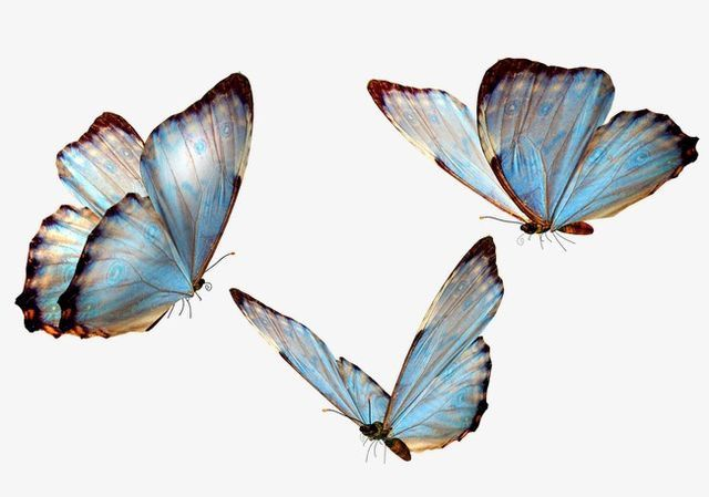 Pin By Got Akd On Creatures Real Butterfly Clip Art Butterfly Art Butterfly Drawing