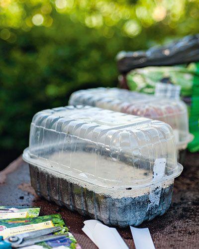 Sammeln & säen: So ziehen Sie Ihre Pflanzen selbst