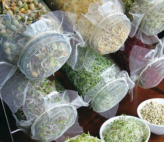 soak your seeds overnight & cover the jar with a mesh screen & rubber band. In the morning drain the water & rinse the seeds twice daily, placing them on a rack to drain during the day. Harvest them w/in 3-7 days. Some of the easiest sprouts to grow: alfalfa, fenugreek, radish, broccoli, onion, cabbage, mustard, garbanzo beans, mung beans, quinoa, lentils and wheat.