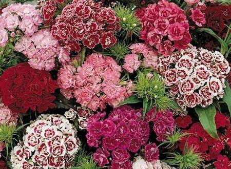25+ bästa idéerna om oeillet fleur på pinterest   beau bouquet de