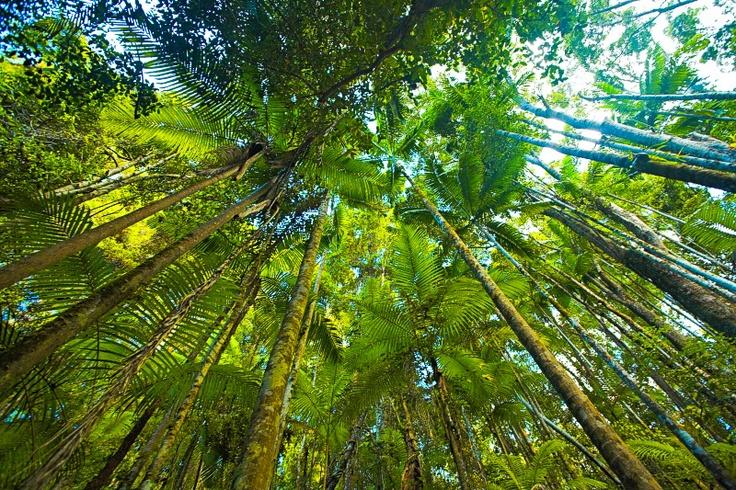 Fraser Island-rainforest