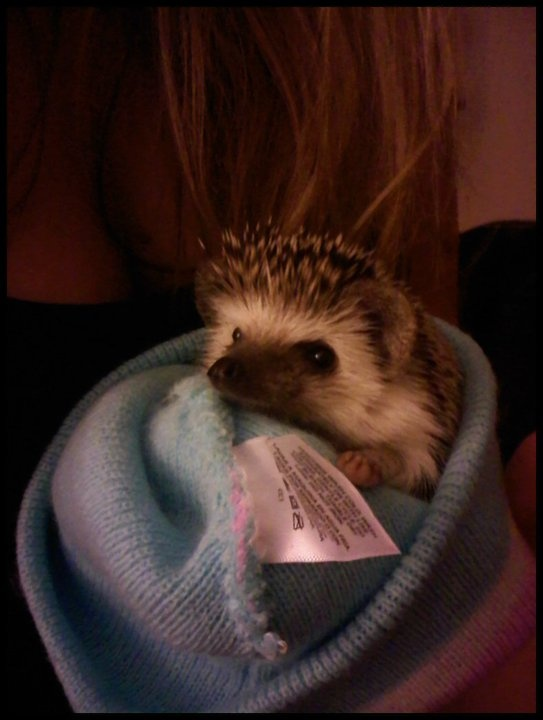 My little hedgie