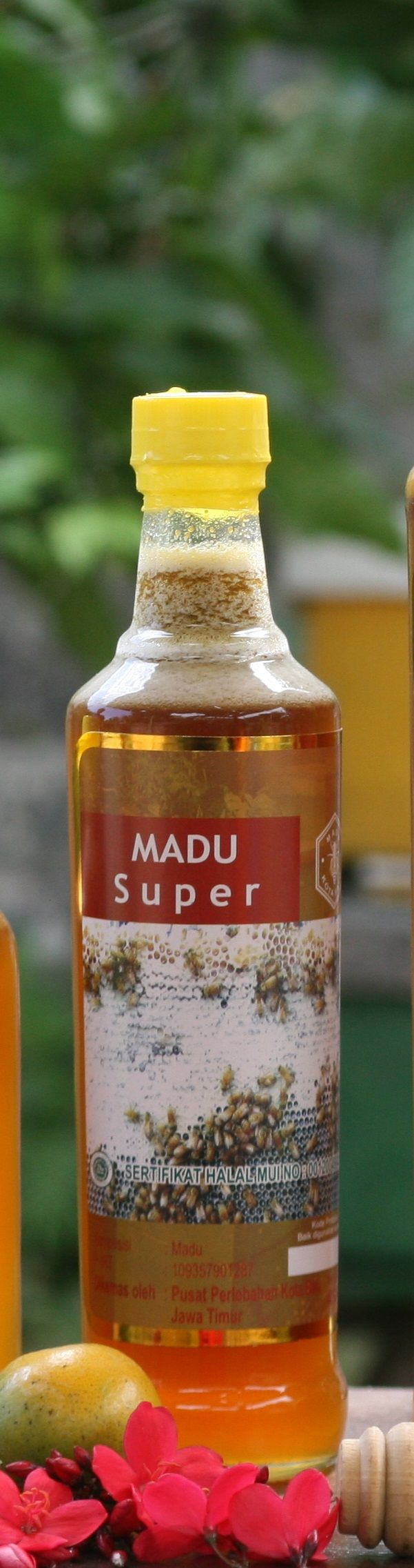 madu asi, madu asli untuk wajah, madu asli untuk anak, honey the kid original, honey the girl who can see smell original, honey on the face is it good original, honey on the skin original, madu asli hpai, madu asli Apotik, madu asli dicampur telur, madu asli encer, efek madu asli, madu asli freezer, madu flora asli, madu asli female daily, madu asli gas, madu asli grosir, madu asli hutan liar,