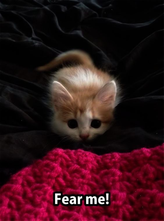 Hi There With Images Baby Cats Cute Baby Animals Cute Animals