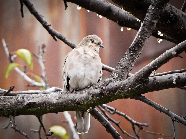 #bird #nature #natura #autumn #valparaíso #Chile #animals DSC02968 by FotografiArte :), via Flickr