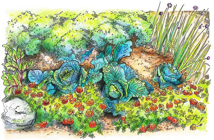 Warzywa i zioła w ogrodzie - przeczytaj nasz artykuł na ten temat.