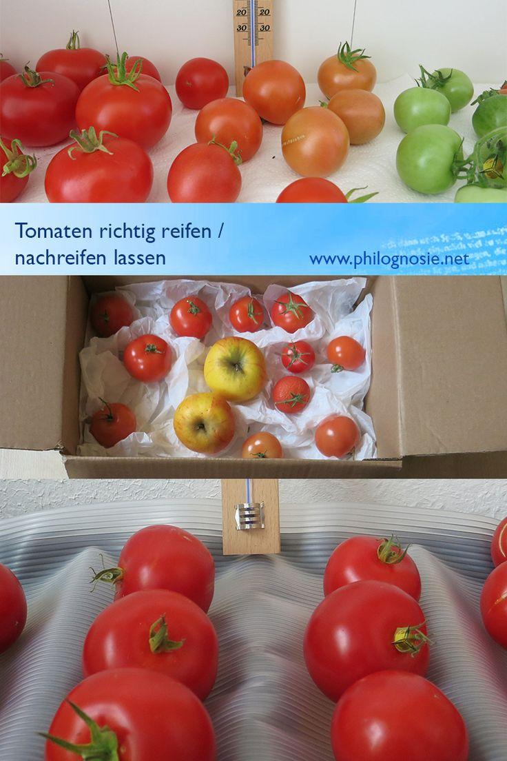 tomaten richtig reifen nachreifen lassen anleitung. Black Bedroom Furniture Sets. Home Design Ideas