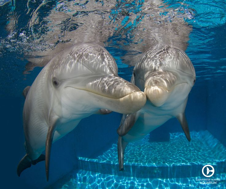 40 best images about Winter & Hope Dolphins on Pinterest ...