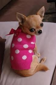 Chi pretty in pink