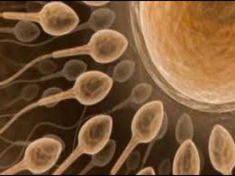 Sperm Arttırıcı Bitkiler İbrahim Saraçoğlu (Şifa Market 0224 234 56 78)