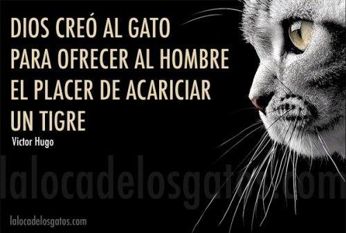 dios-creo-gato
