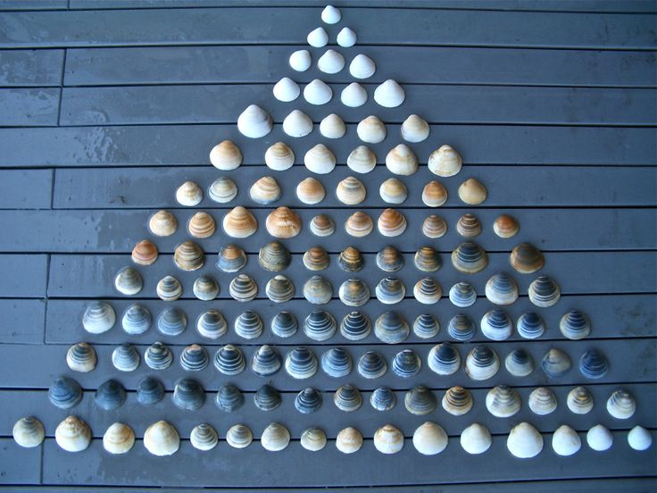 shells arranged by color