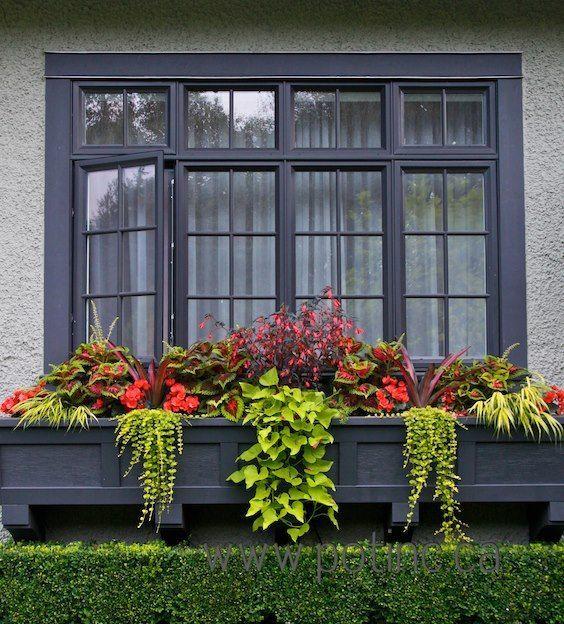 1027 mejores imágenes de window & doorway abloom en pinterest