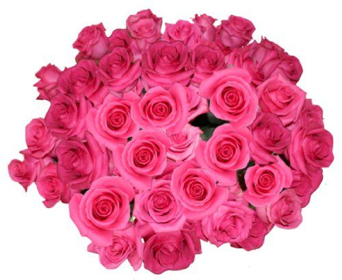 Flowers For Delivery - Impress Her With 50 GIANT, HOT PINK (Or Choose Color) Incredibly Fragrant Long Stem Roses-FREE GIFT MESSAGE - Top Rated Roses On Amazon from Spring in the Air Luxury Roses - Will WOW Your Recipient! - http://yourflowers.us/flowers-for-delivery-impress-her-with-50-giant-hot-pink-or-choose-color-incredibly-fragrant-long-stem-roses-free-gift-message-top-rated-roses-on-amazon-from-spring-in-the-air-luxury-roses-wil/