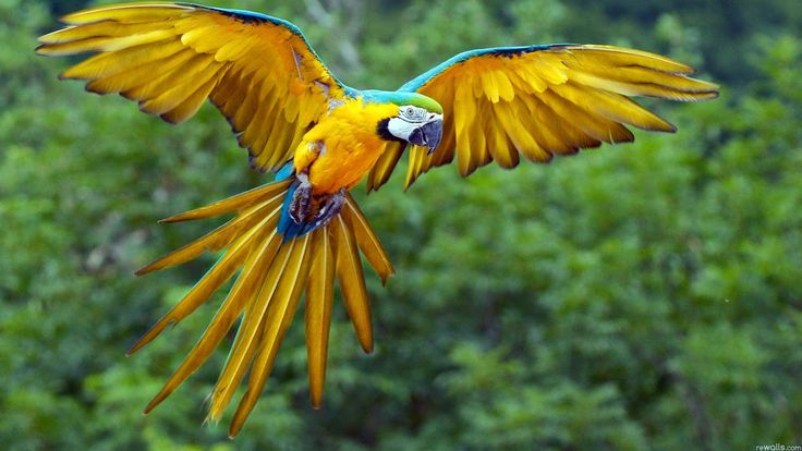 Colorful parrot bird cute animal nature beauty wallpaper ...