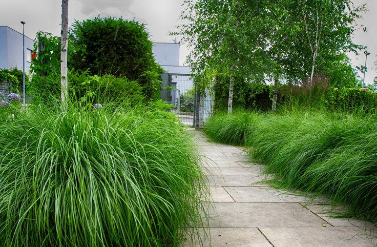 #landcape #architecture #garden #path