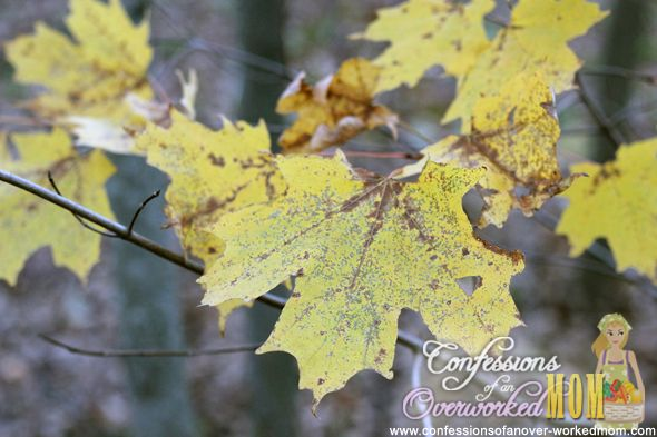 Vermont leaves: Fall Recipes, Outdoor Living, Beautiful Places, Fab Bloggers, Bloggers Finding, Awesome Photography, Things Fun, Nature Beautiful, Pretty Pictures
