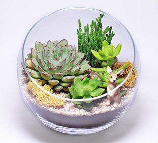 Флорариум – это неповторимая композиция из живых растений. Находясь в стеклянной оболочке, влаголюбивые тропические растения и суккуленты потребуют минимального ухода, а красивые, яркие, наполненные свежестью живые композиции сохранятся намного дольше, чем в обычных комнатных горшках.
