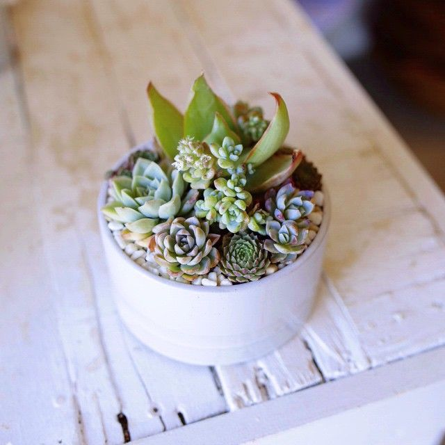 Small Circular Arrangement, Perfect For A Small Table Space Or Office Desk!  Arrangement By