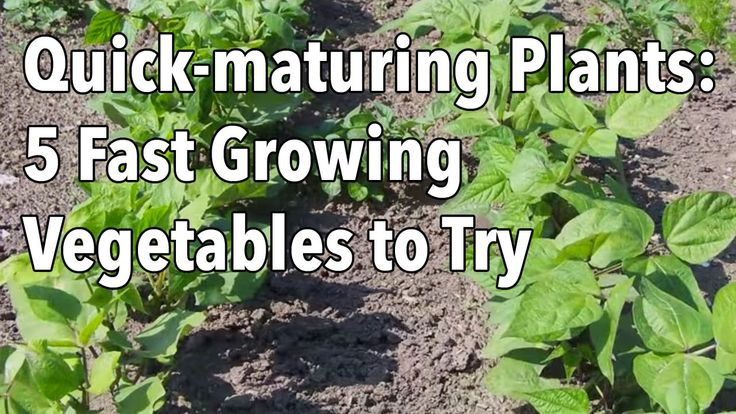Top 5 Pick For Fast Harvest Plants Before Fall