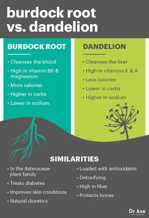 Burdock root vs. dandelion - Dr. Axe http://www.draxe.com #health #Holistic #natural