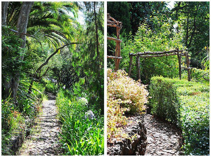 Funchal: explosion de couleurs au jardin botanique                                                                                                                                                                                 Plus