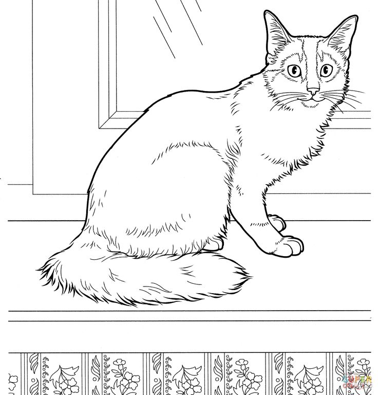 Somali Cat Coloring Page From Cats Category Select 24848 Printable Crafts Of Cartoons Nature Animals Bible And Many More