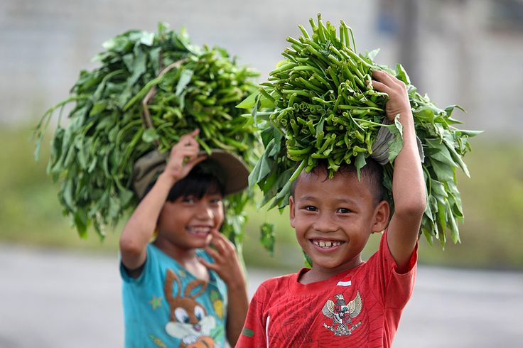 Kids collecting Kangkong, a typ of wild vegetable found along streams and in wetlands. North Nias Regency, Nias Island, Indonesia. Photo by Bjorn Svensson. www.northniastourism.com
