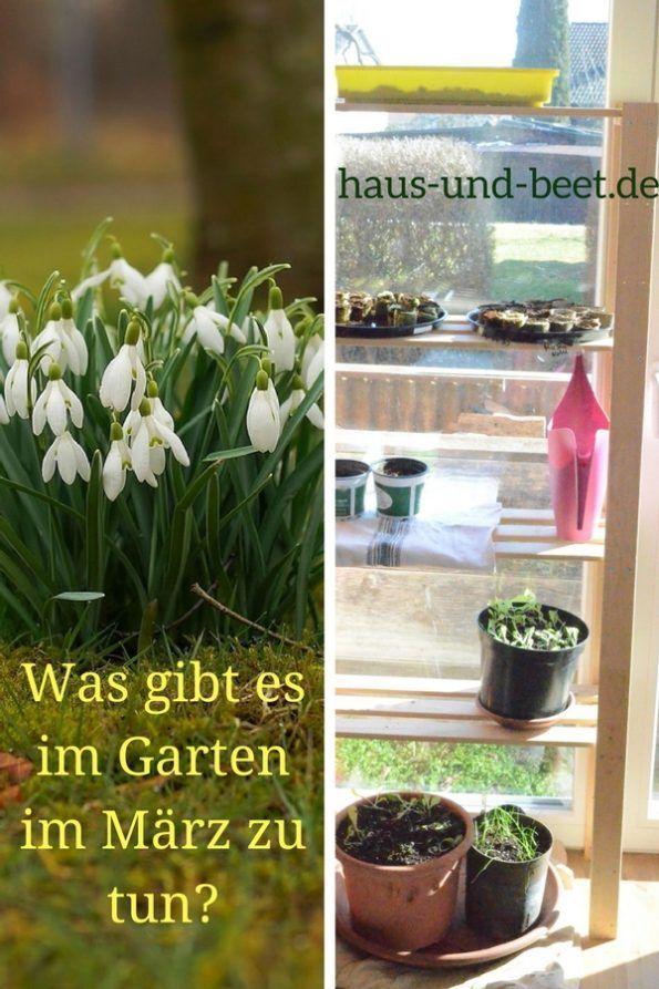 Es Ist Marz Was Gibt Es Im Garten Im Marz Zu Tun Garten Garten Pflanzen Gartenarbeit