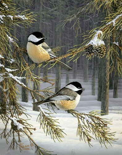Woodland Chickadee...Sam Timm