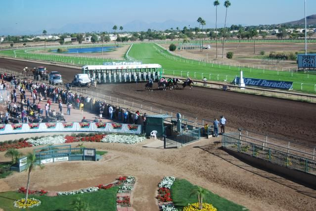 Turf Paradise is a racetrack with live horse racing in Phoenix, AZ. . Get directions, ticket info, and and other details about watching and betting.