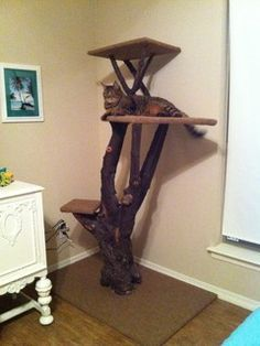 making cat furniture from logs and branches? - Google Search