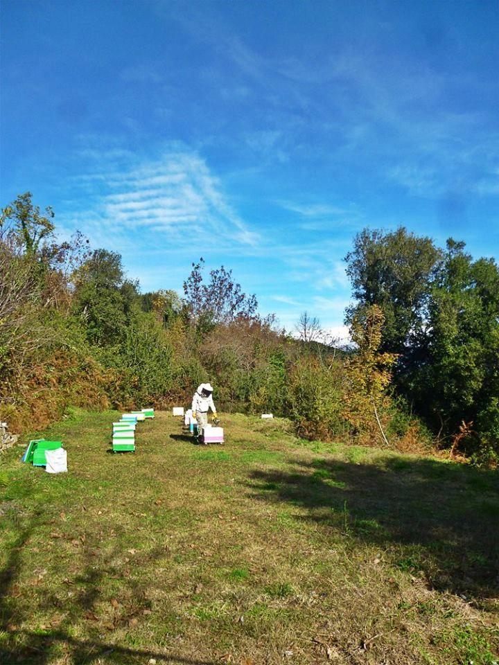 Επιθεώρηση στα ορεινά της Πίνδου. Οι μέλισσες συλλέγουν νέκταρ από ρείκι και κουμαριά.